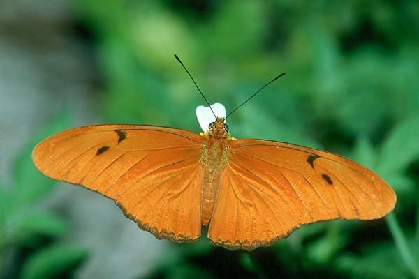 <H2>Butterflies</H2>