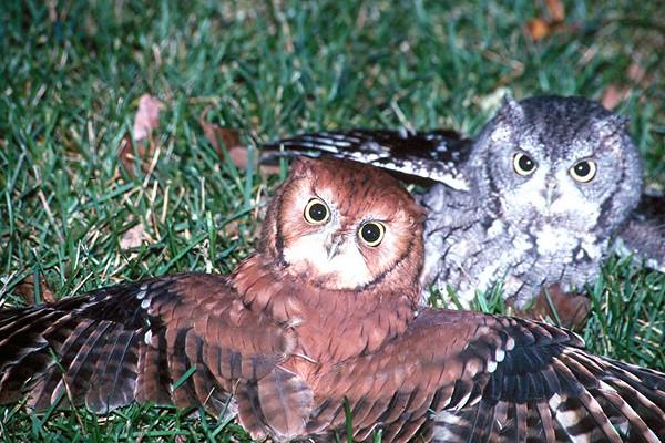 <H2>Eagles, Hawks, Vultures, Owls</H2>