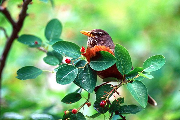 <H2>Tanagers, Warblers, Sparrows, Finches, Bluebirds</H2>